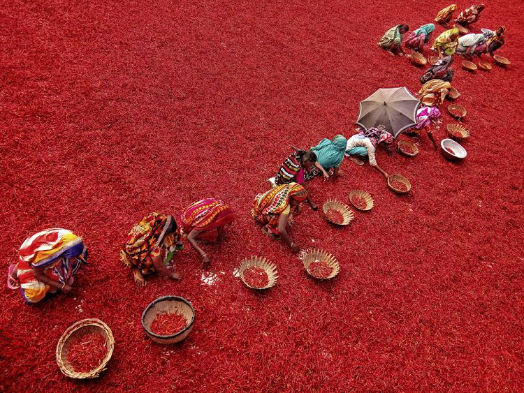 Красный чили перец на площадке для сушки