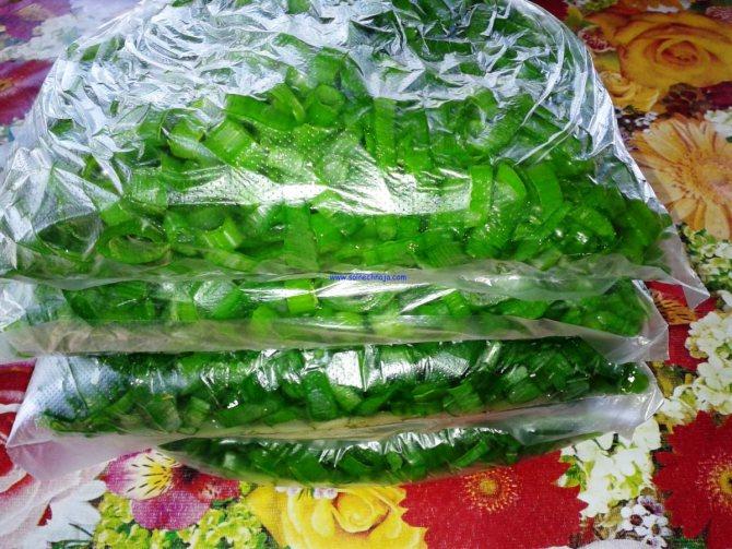 Заморозка зелёного лука на зиму