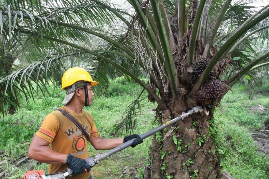 Почему вредно пальмовое масло?